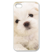 lonely bichon frise Case for iPhone 4,4S