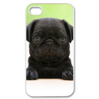small black dog Case for iPhone 4,4S