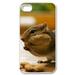 squirrel Case for iPhone 4,4S
