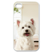 white dog at home Case for iPhone 4,4S