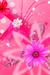 pink pretty flowers