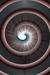 snail  vortex