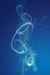 blue writing