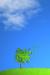 tree under the blue sky