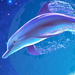 elegant dolphin