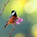 bird on the flower