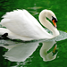 goose on the green water