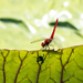 dragonfly on the leave