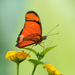 red butterfly on the flowers