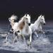3 white  horses