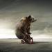 bear sporting