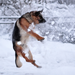 dog playing the snow