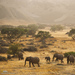 elephant team