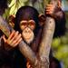 expecting monkey