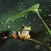 frog with the leaf