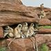monkey families