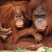 old monkeys