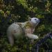 polar bear in the tree