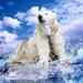 polar bear on the river