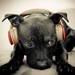 the black dog with music
