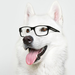 the dog with eye glasses
