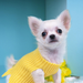 the dog with yellow dress