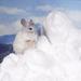 little rabbit with snow