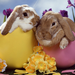 rabbit friends