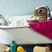 the rabbit having a bath
