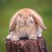 the rabbit on the stumps