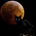 black cat in the evening