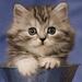 little brown cat