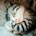 sleeping little cat