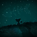 the cat under the stars