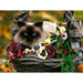the cat in the flower basket
