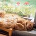 the lying sleeping cat