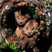two cats in the stump