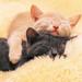 white cat and black cat