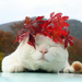 wedding sleeping cat