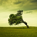 lying tree