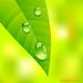 one morning leaf