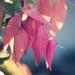 pink leaf flowers