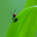 the insect on the green leaf